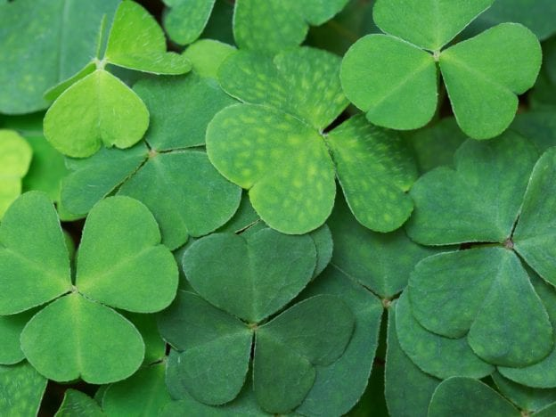 St. Patrick's Day Online Class course image